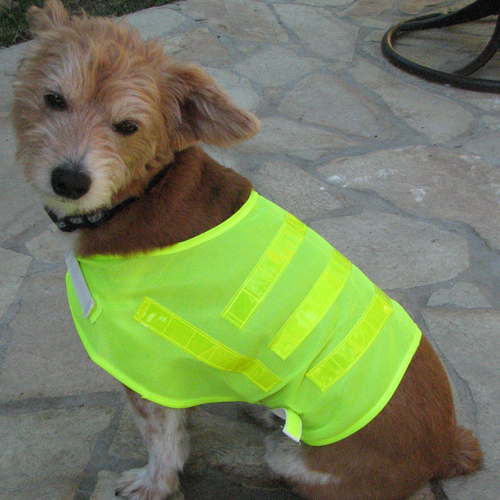 Pet Safety Vest -One Size Fits All